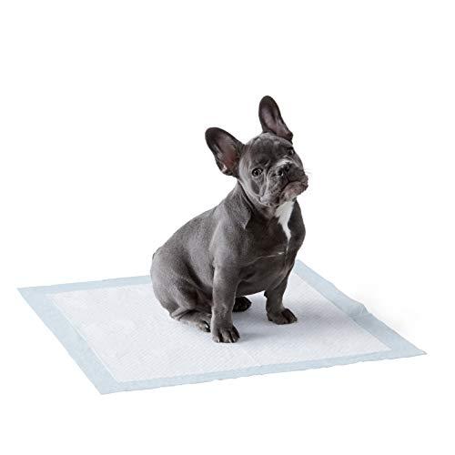 AmazonBasics Puppy Pads Trainingsunterlagen für...