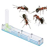 Муравейник, замок муравьиной фермы натуральные насекомые эко ящик ...