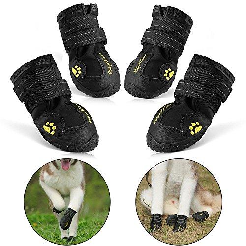 Hondenschoenen Top 10 EERLIJKE TESTS
