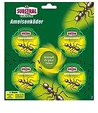 Appât Substral Celaflor Ant, pour combattre ...