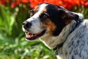 Hundeschreck Ultraschall