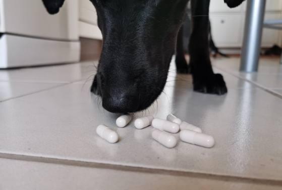 Совместные таблетки для собак Top 10