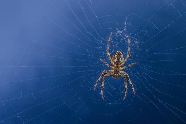 Ratgeber: Spinnen vertreiben