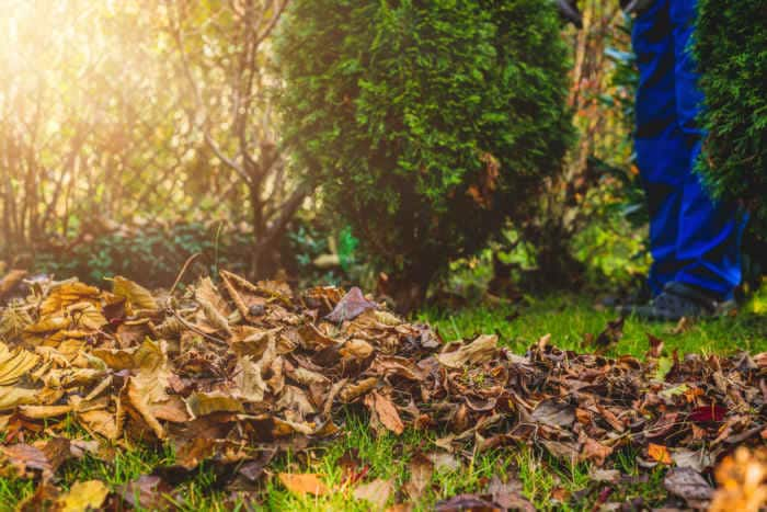Laub entfernen: Tipps zur laubfreien Wiese