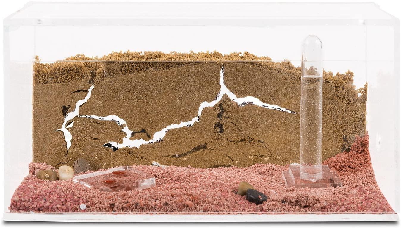 Ameisenfarm