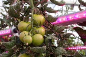 Guide: LED grow lights for growing plants indoors